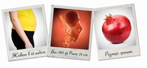 Узнайте, как происходит развитие плода на 18 неделе беременности.