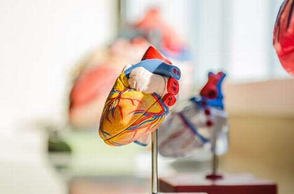макет сердца