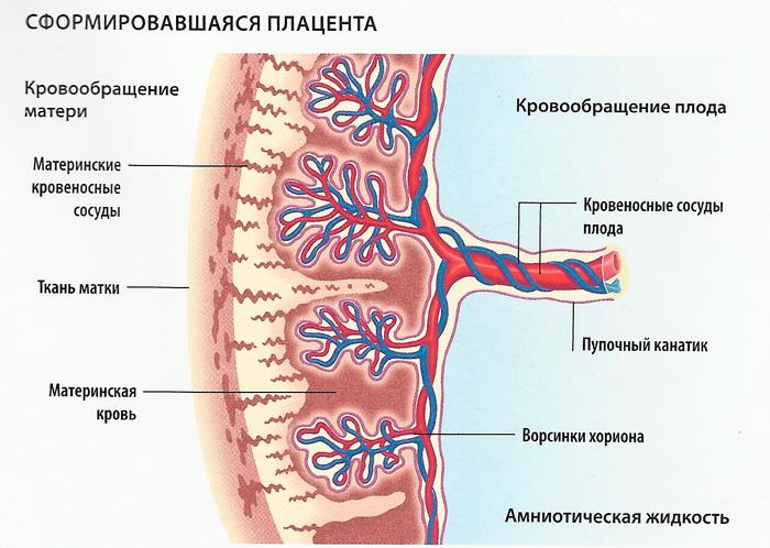 Что такое неиммунная гиперплазия плаценты лечение при беременности