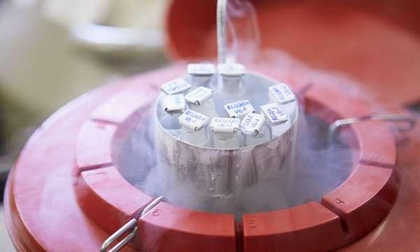 Оставшиеся эмбрионы часто замораживают на случай, если пара решится на второго ребенка.