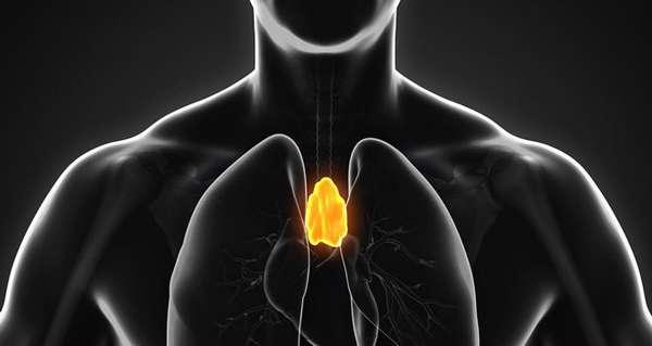 ВИЛОЧКОВАЯ ЖЕЛЕЗА факотры влияющие на состояние иммунной системы