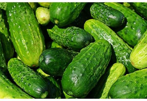 Зеленые огурцы