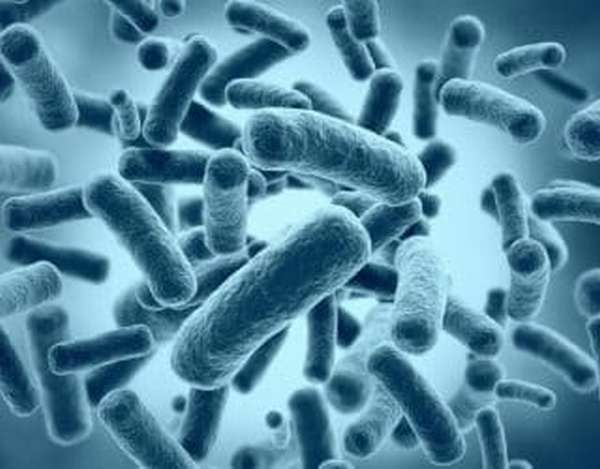 Какими таблетками лечить helicobacter pylori