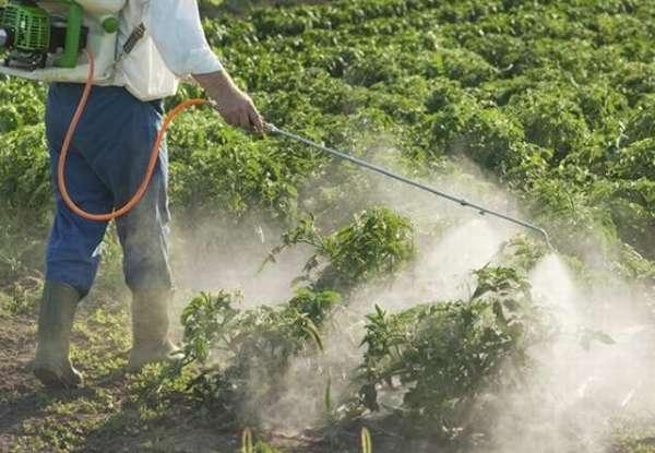 орошать пестицидами картошку