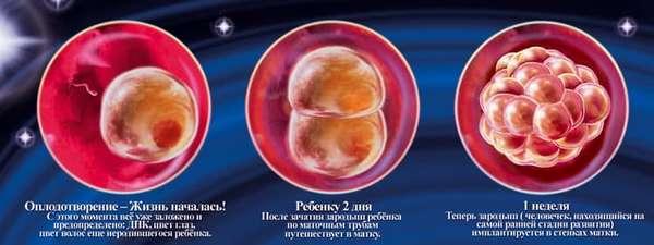 Что происходит в 102 недели беременности