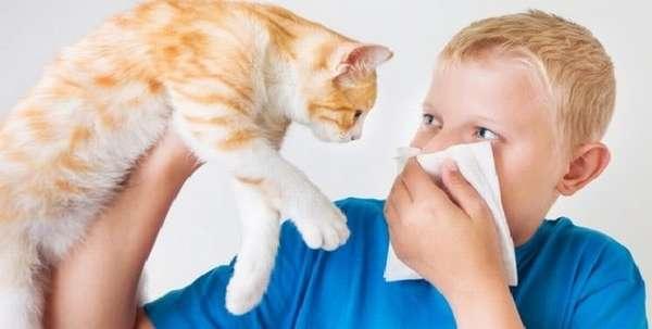 Если кошку не хочется никому отдавать, а ребенок страдает от аллергии, можно по крайней мере не пускать ее в детскую, чаще отправлять животное гулять во двор.