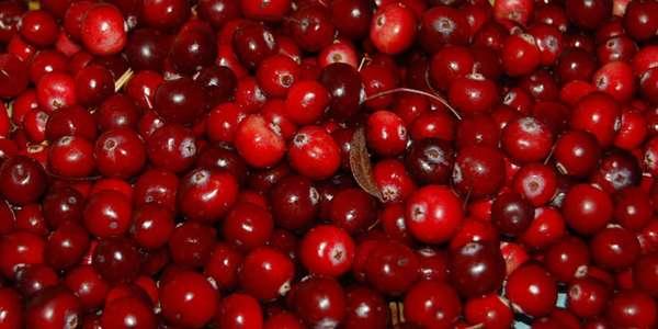 Клюква для иммунитета незаменимым продукт на 90% из жидкости и 10% сахар, фруктоза, другие компоненты