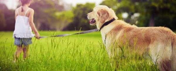 Аллергия на собаку у ребенка: симптомы и лечение