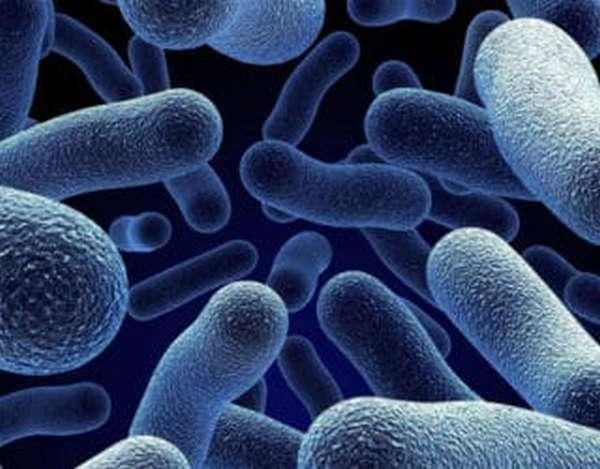 Симптомы хеликобактер пилори в организме и методы лечения