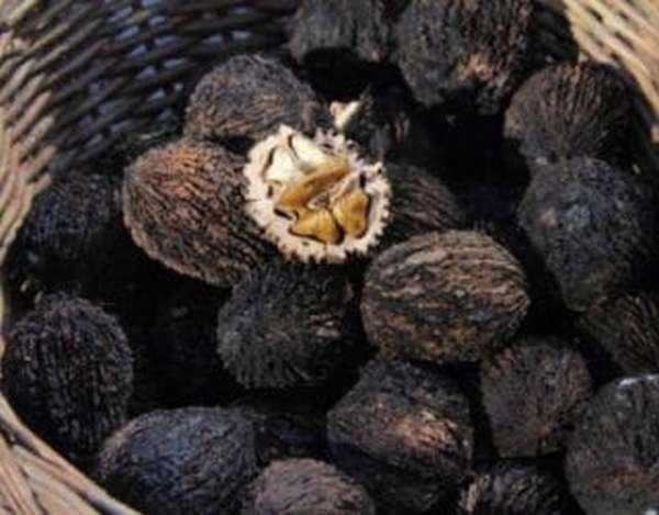 Для чего и как применяют черный орех